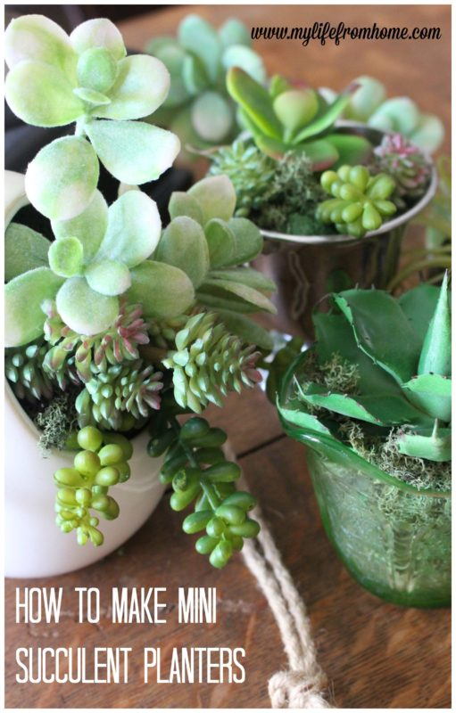 My Life from Home - Mini Succulent Arragements